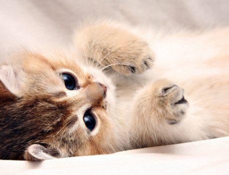 تاثیر حیوانات خانگی در زندگی ما